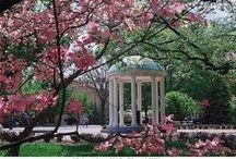 Things to Do in Chapel Hill / by Rhonda Stults, Realtor