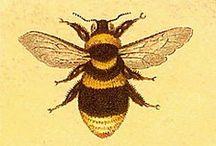 Bees / by Elizabeth