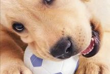 Dogs and Puppies / by ThePuppy.org