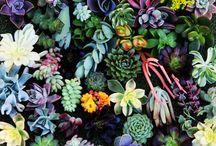 I'd Grow This / by Sarah Bryson Banh
