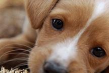 Puppy Love / by Tracy Elliott