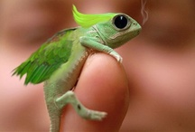 Sean / by Pamela Meekins