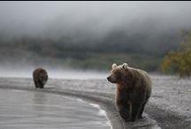 bears / by Katarzyna Mojkowska