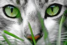Kitties / by Laura Kline