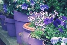 Garden / by A Y