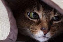 Love Cats❤️ / Pessoas que odeiam gatos, voltarão como ratos na próxima vida.haha / by Claudia Souza