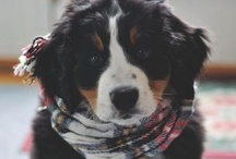 I want a doggy! / by Aurelia Christensen