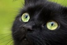 Black Cats steal ❤'s not souls / black cat / by Gina Marino †☠Mystical Enchantments☠†