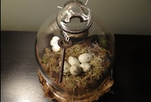 Cloches and Domes / glass cloches, vintage cloches, wire cloches, antique cloches, easter cloche, christmas cloche, winter cloche, terrarium cloche,  / by Gina Marino †☠Mystical Enchantments☠†