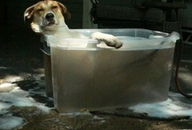 Those Wonderful Dogs / by Brenda Fitz