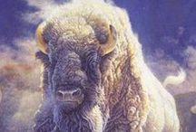 Wuauquikuna   / White Buffalo - Our Native Heritage / by Katie Eileen Corliss Green