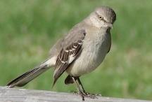 Birds  / by Susan Torrington