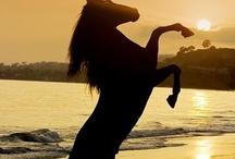 My future horse™ / by Chloe Mcklarien
