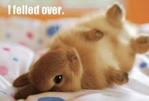 too cute!... / by Miranda Ljung-Baruth