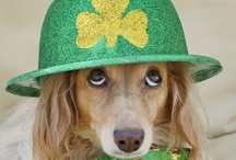 St. Patrick's Day /  St. Patrick Day recipes, ideas, and more!  / by Underwood Spreads