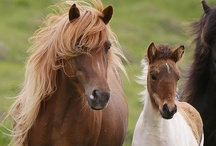 Horses / by GG