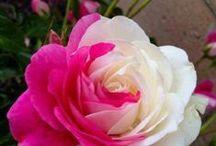 Flowers / by Laura Handel