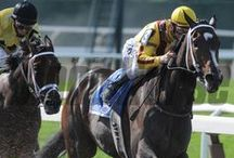 Rachel Alexandra / by The Blood-Horse