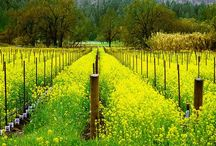 Napa Valley / by Pam Manuel