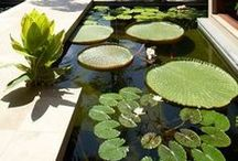 Landscape Garden Design / by Isometrics