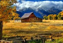 Barns / by D A