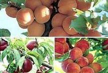 COSECHAS /  Mi siembra será Amor, mi riego la calma y mi cosecha sonrisas. El fruto será para el mundo. / by Genoveva MARTINEZ