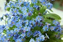 """PLANTAS Y FLORES / """"Porque si todas las plantas, flores, hojas y pájaros pasearan juntos, habría una multitud danzando al son de la música.""""  ―Frances Hodgson Burnett / by Genoveva MARTINEZ"""