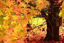 Autumn Delight / by Joen Wolfrom