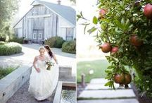 Wine Country Wedding Planner / Napa Valley Wedding | Napa Valley Wedding Planner | Sonoma  Wedding Planner | Sonoma Valley Wedding | Wine Country Wedding | Northern California Wedding Planner / by Shannon Leahy Events