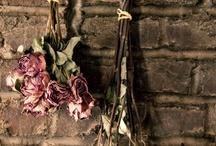 Droog   bloemen / by eenentwee