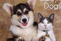 Animal Calendars / by MegaCalendars.com