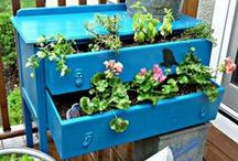 Fresh Scapes & Gardens / Indoor, container, porch & full scale gardens to love.  / by Linda Sue Collins