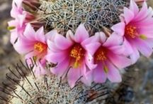 Succulents and cactii / by Chris Hollitzer