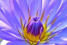 Flowers - Soul's Medicine / by Michele Randall