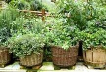 Gardening / by jenn overturf