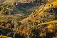 Maremma & Tuscany / Travel tips about Tuscany and the Maremma Park  / by Terravision Group