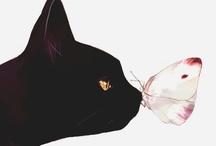 Black cat love / by Imogheena Farandel