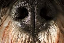 Close-up and Personal / Great close-ups of dog noses, paws, teeth... / by Col. Potter Cairn Rescue Network