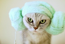 Here, Kitty, Kitty / by Kay Carlson