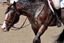 Horses / by Darian Horrigan
