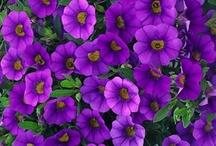 Gardens & Gardening / by Patty Hale Prange