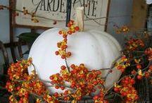 Halloween & Autumn / by Nancy D'Emilio