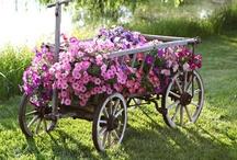 Flower Gardens,  Markets & Shops / by Marie Wilfinger