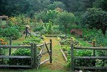 Gardening... / by Marie Wilfinger