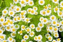 garden of daisy / by Orn