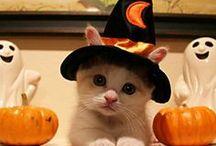 halloween / by Chelsea Kirkwood