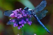 AHHHHH.......Blues & Purples / by Christine Palmer