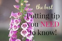 Gardening / by Lauras Little House Tips