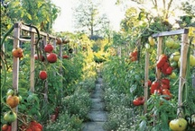 Gardening Inspiration / by Oregon State University Extension Service