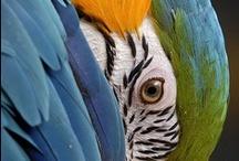 "FFF-Birds ""NO NEW PINS"" / by Woolong"
